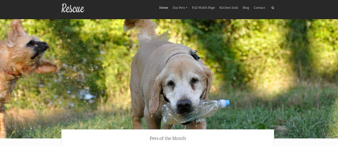 Pet Rescue WordPress Template