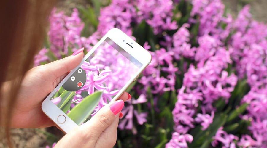 Smartphone-taking-photo-flower-iphone-6